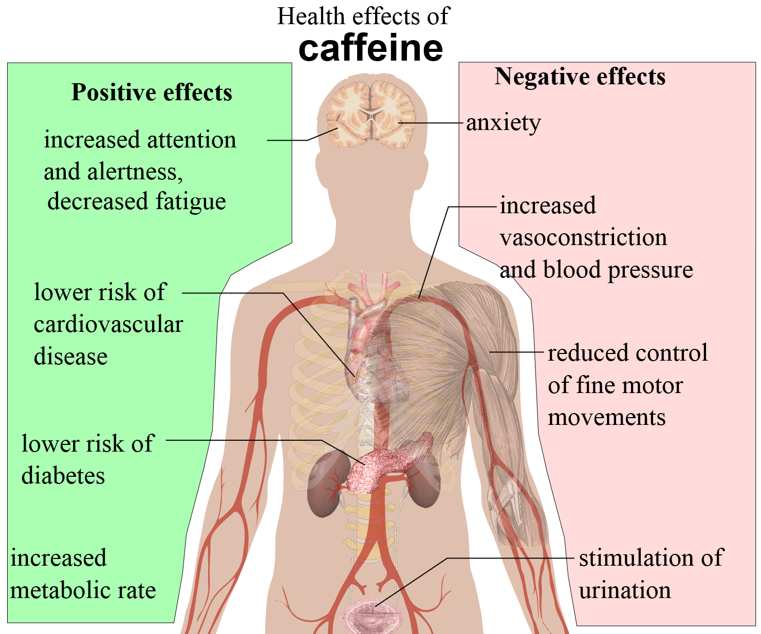 Health Effect of Caffeine; Reality or Myth