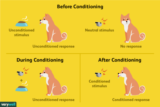 Biological Perspective on Classical Conditioning
