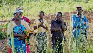 Gender and Development in Malawi